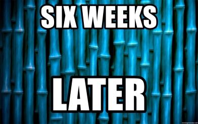 six-weeks-later.jpg