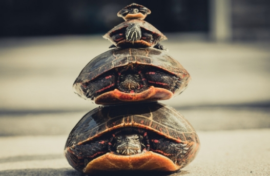 turtlesstacked